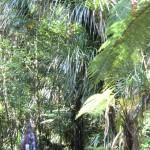 Tini im Wunderwald