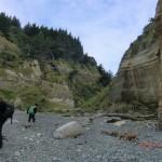 Erdbeben-Urwald-Schluchten