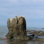 Tölpel auf dem Fels