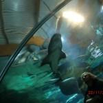 zwei gefährliche Genossen: Hai und Wolf