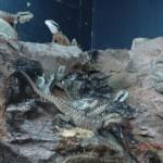 noch mehr Reptil