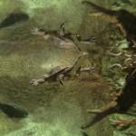 Schildkröten, Terrapins und so