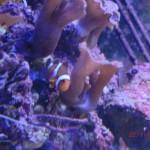 wir fanden auch Nemo