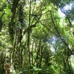 neuseeländischer Wald sieht anders aus als deutscher, Lianen, Palmen und Farn