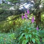 Blumen am Waldrand