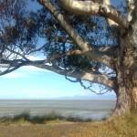 unterm Eukalyptus
