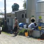 Vivian füllt frische Milch direkt bei Milchbauer Ruben ab