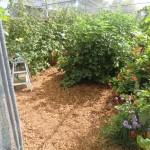 der frisch bemulchte Beeren-Kräuter-Käfig