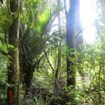 neuseeländischer Urwald