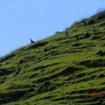 dieses Mal kein Schaf =:-)