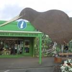 großer Kiwi am Wegesrand