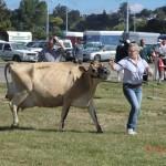 arme Kuh, zu dicke Euter!
