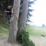 der Baum hat Stufen
