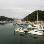 Picton Harbour, viele Boote, stille Wasser
