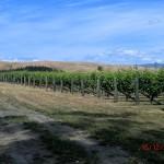 die braunen Berge hinterm Weinfeld sahen toll aus