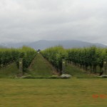 Berge hinterm Wein