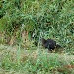 unechter Kiwi-Vogel