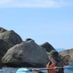 Pinnacle Island: Seelöwen und Komorane