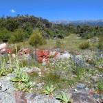 rote Steine, schöne Blumen, dahinter Berge