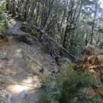 Entwurzelungen auf dem Weg, der Berg lebt