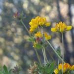 Blumen am Berghang (ich hoffe, ich muss die nicht kennen?!)