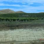 Wein in Windeseile