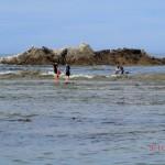 auf dem Weg zu einer Seelöwen-Kolonie hinter Kaikoura