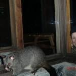 zwei komische Wesen in der Nacht