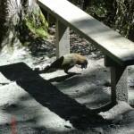 und da ist der erste Kea!!!