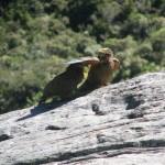 Bilder von Marian: weitere Keas auf dem Gipfel