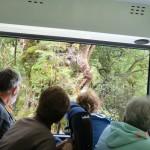 Doubtful Sound Overnight: im Bus zwischen See und Sound, eine alte Beech (Birke)