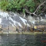 Doubtful Sound Overnight: nah an den Soundufern, Enten unter Regenwäldern