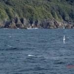 Doubtful Sound Overnight: unser erster Albatros! toll!