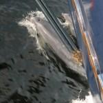 Doubtful Sound Overnight: so schnell wie das Boot