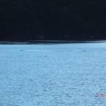 Doubtful Sound Overnight: noch mehr in der Ferne