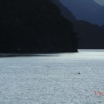 Doubtful Sound Overnight: eine Flosse am Morgen