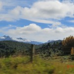 auf der Fahrt von Te Anau zum Milford Sound II (herbstfarbene Baumwipfel)