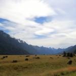 auf der Fahrt von Te Anau zum Milford Sound V