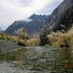 auf der Fahrt von Te Anau zum Milford Sound IX
