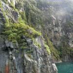 Felsen und Regenwald am Milford