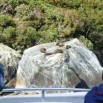 Seals auf dem Stein