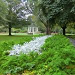 Invercargills Garten - ein Petersilienbeet?!