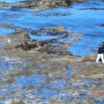 Curio-Bay: versteinerte Bäume, Mondlandschaften und ein Gelbaugen-Pinguin