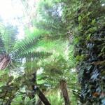 Farne, Immergrün - Neuseelands Urwald in den Catlins