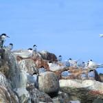 noch mehr Vögel mit Kappen