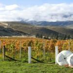 Clearvue Vineyard in Herbstfarben II