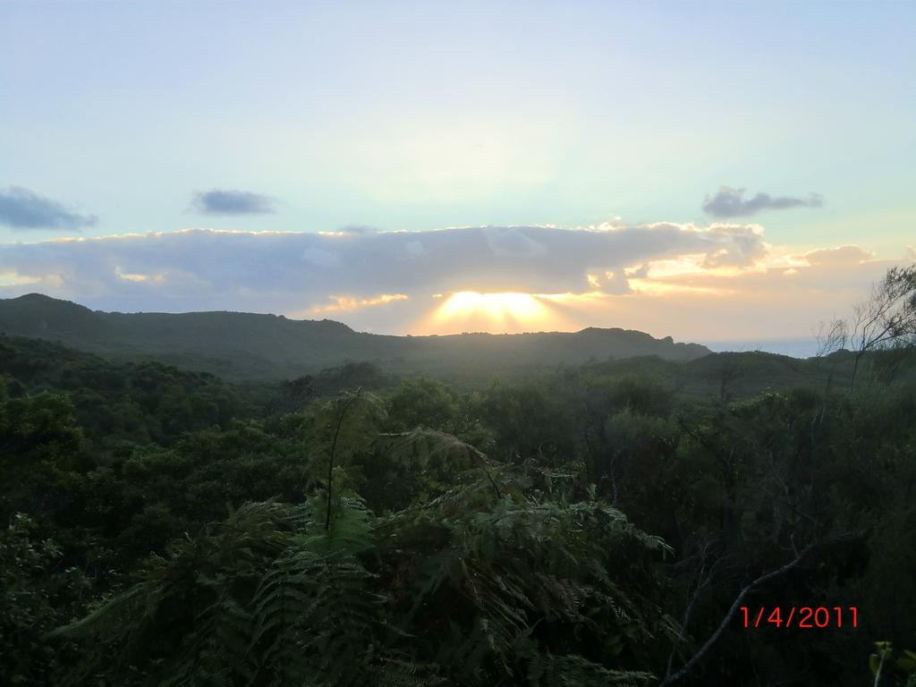 weiter Regenwald und Sonnenuntergang an der West Coast