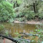 Wanderung mit Angie: Fluss im Regenwald