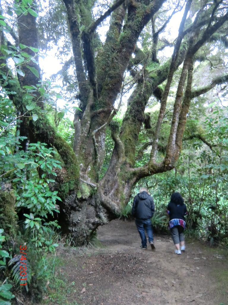 Wanderung mit Angie: durch den Zauberwald