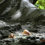 sogar ein paar Zikadenhüllen hingen noch an den Bäumen